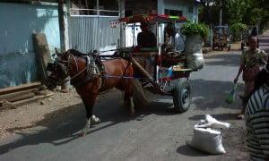 Sarana transportasi lombok tradisional cidomo