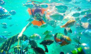 Suasana snorkeling di gili nanggu, sumber ig ahmadalattaz