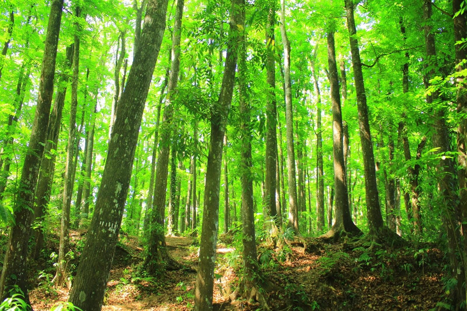 Wisata Alam, Hutan Lindung Sesaot Lombok