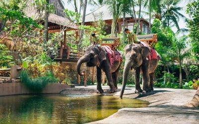 Keindahan Lombok Elephant Park Yang Cocok Untuk Wisata Keluarga