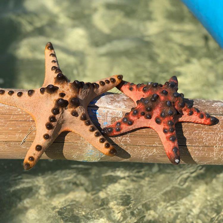 Bintang Laut di Gili Pasir, sumber ig laurainges08