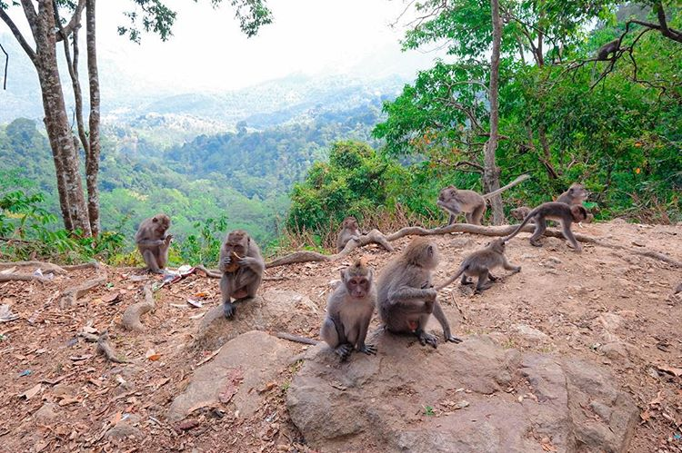 Hutan Pusuk, sumber ig ericogautama