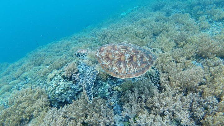 Spot Penyu di Gili Air, sumber ig dewishintaps